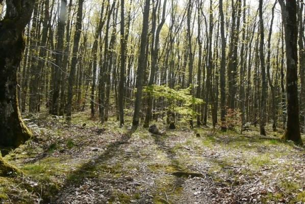 Et ils me cloueront sur le bois © Vincent Boujon