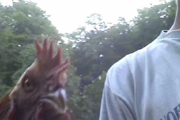 Tuerie des poules © KastôrAgile